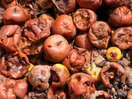 Food waste and COP21